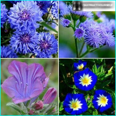 Цветни кревет у плаво-љубичастој нијанси