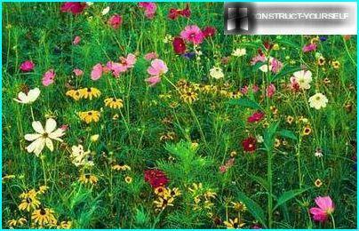 Motley un dinamiskas mauru pļava