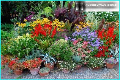 The design of miksbordera seasonal potted plants