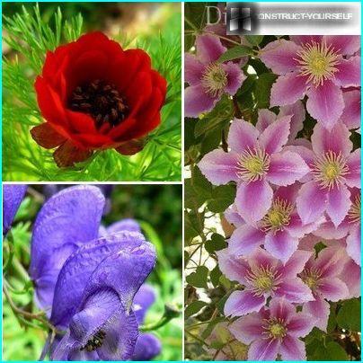Daudzgadīgi augi, kurus viegli panest rudens stādīšana