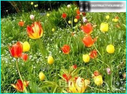 Maurischer Rasen mit Zwiebelpflanzen