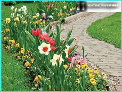 Esiliinat ja keväällä kukkiva sipulikasvi