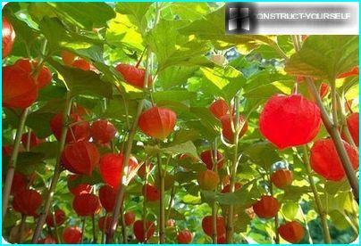 Règles de sélection des fleurs vivaces plantées en automne