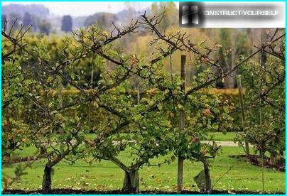Tapestry fra æbletræer