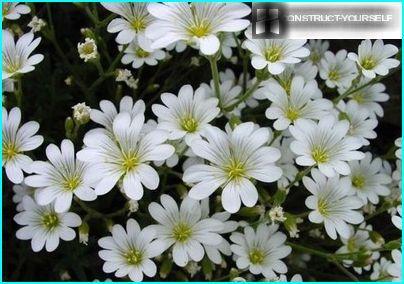 Teppich von Miniaturblumen