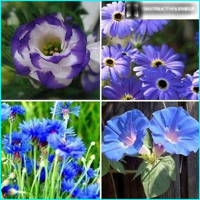 Plants with flowers in shades of blue