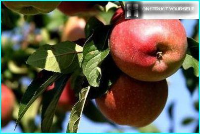 Høst æbler