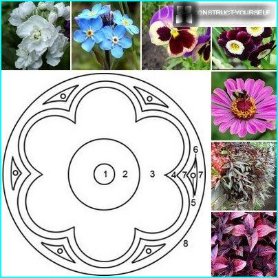 """Schematic design of flowerbeds """"Vienna flower"""" with a selection of plants"""
