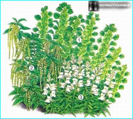 Green-white flower garden of annuals