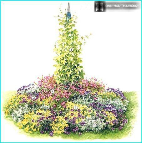 The scheme of the flower garden of annuals