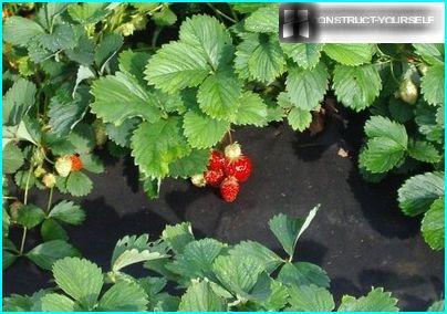 Puhtaat agrofiber-vuoteet