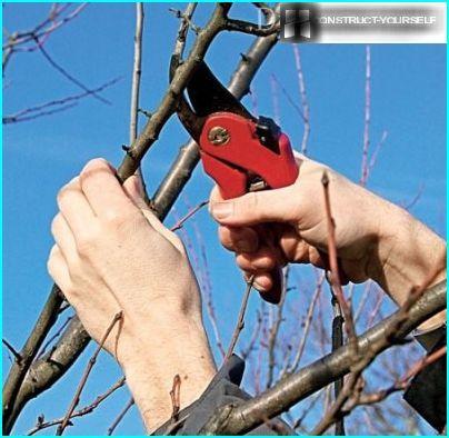 Beskæring af træer