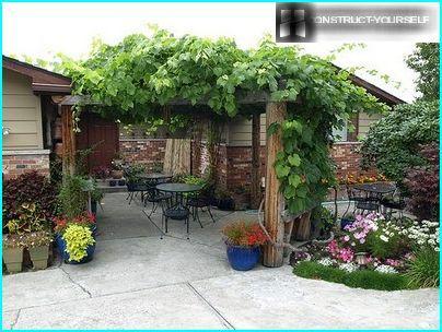 Рослини для вертикального озеленення: переваги вибору