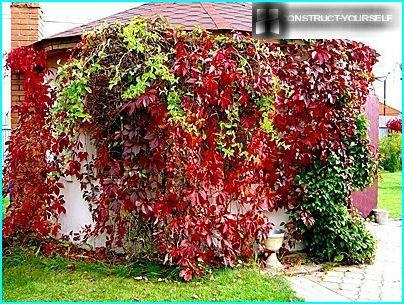 พืชที่ดูแลง่ายสำหรับทำสวนแนวตั้ง