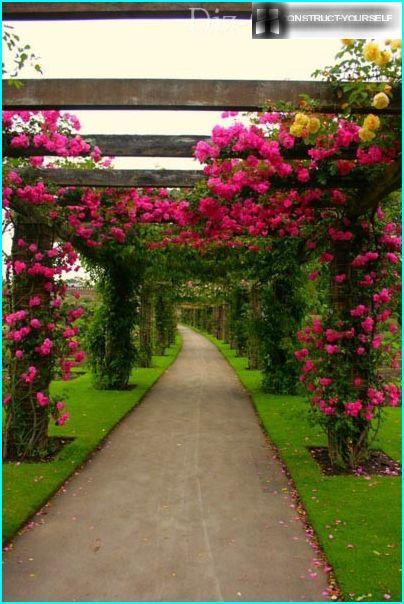 ไม้ดอกสวยงามสำหรับทำสวนแนวตั้ง