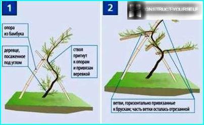Technique de moulage du bois