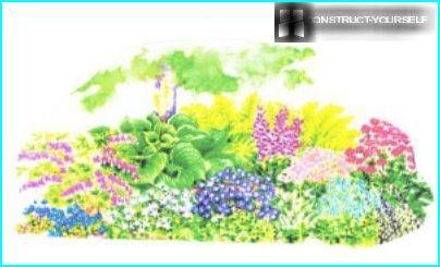 Kukkapenkin piirustus