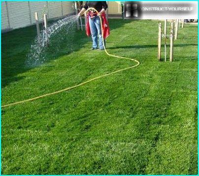 Den Rasen gießen