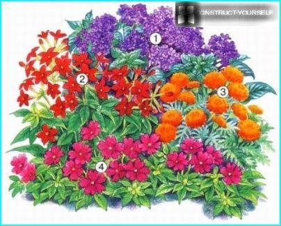 Sekoitettu kukkapenkki kirkkain värein