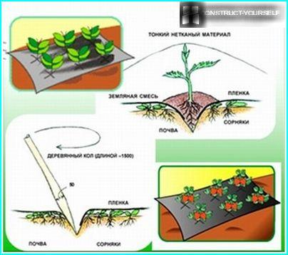 The scheme of using non-woven covering material from weeds