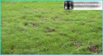 Græsplæne skaldede pletter