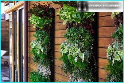 Pystysuora seinä vihreys
