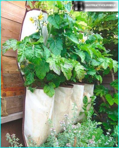 Garten an der Wand