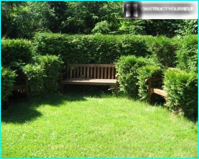 Angolo accogliente nel giardino di conifere