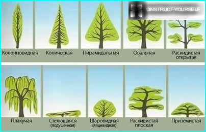 Plants with different canopy