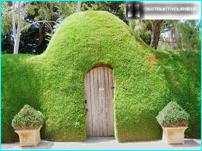 Zielony płot do ogrodu