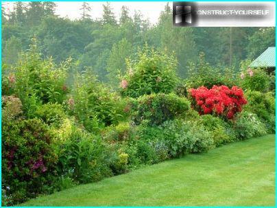 Ogrodzenie z krzewów liściastych, drzew