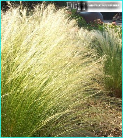 Групови насаждения от перна трева