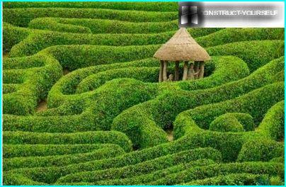 Zielony labirynt