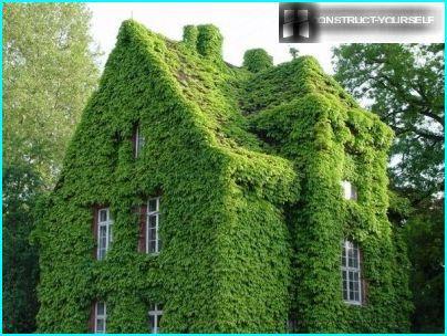 Zarośnięty zielony dom