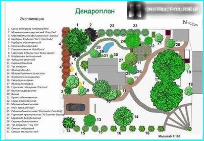 Dendroplanin puutarhatontti asteikolla 1: 100