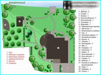 Dendroplan suburban area