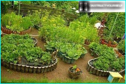 Oriģinālas dārzeņu gultas
