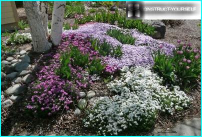 Aiuola con fiori di primavera
