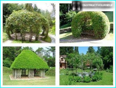 Arbours of Tree Climbing Plants
