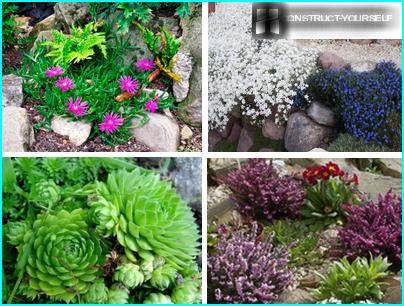 Piante per giardino fiorito