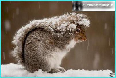 Egern om vinteren