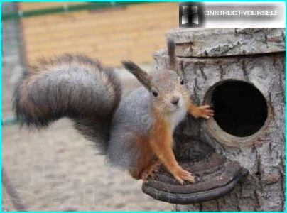 A House For The Squirrels With Their Hands How To Make A Good Belectric