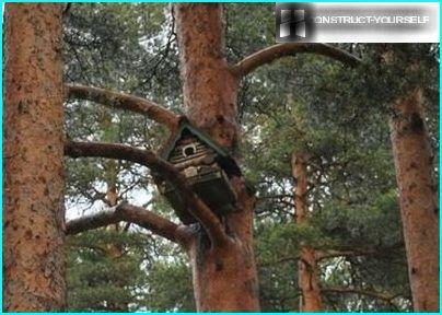 Installation af et hus til et egern