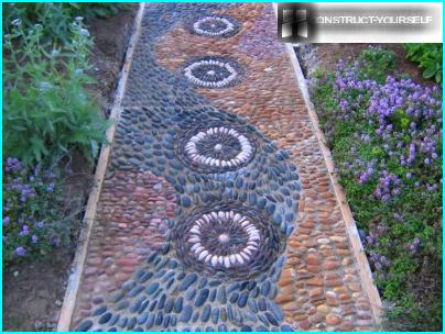 Kuivuudenkestävät kasvit puutarhaan: valitse kauneimmat lajikkeet