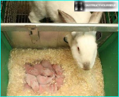 A female rabbit with litter