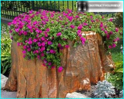 Flower of high-stump