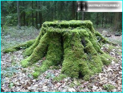 A large stump covered with moss