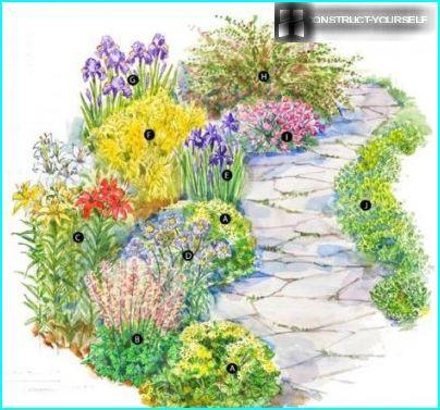 Istutan liljat kiskoilla