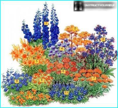 Kaunis kukkapenkki liljoilla violetti-oransseilla sävyillä