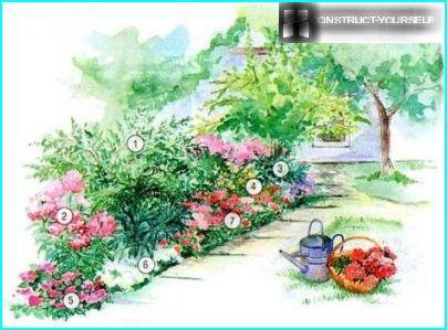Rehevä kukka liljat